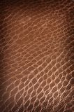 Dark brown crackled leather Stock Photography