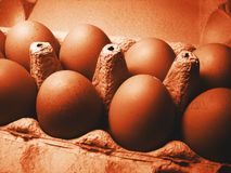 Dark brown eggs 2 Royalty Free Stock Image
