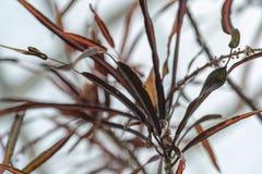 Dark brown flower leaves royalty free stock image