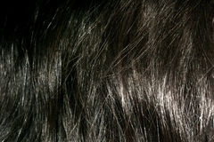 Dark Brown Hair Texture. Messy hair texture of dark brown color as background stock photos