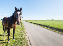 Dark brown horse beside a country road Royalty Free Stock Photo