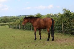 Brown horse HD wallpaper stock images