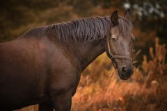 Horse on a meadow. Outdoor natural light stock photo