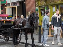 Dark brown horse tethered to carriage outside a pub in Temple Bar, Dublin, Ireland. royalty free stock photo