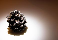 Pine-cone on the table stock photography