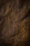 Dark Brown Puckered Leather Stock Images