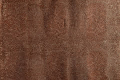Dark brown snakeskin texture Royalty Free Stock Images