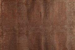 Dark brown snakeskin texture Royalty Free Stock Images