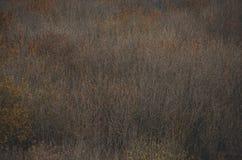Dark brown textured wooden background Stock Photography