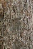 Dark brown tree bark texture Stock Images