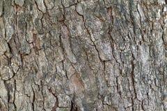 Dark brown tree bark texture Royalty Free Stock Image