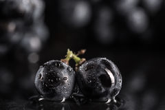 Dark bunch of grape in low light on black  background , macro shot , water drops. Dark bunch of grape in low light on black  background , macro shot , water drop Stock Photo
