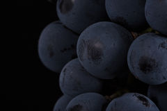 Dark bunch of grape in low light on black isolated background , macro shot , water drops. Dark bunch of grape in low light on black isolated background , macro Stock Images