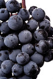 Dark bunch of grape in low light on white  background , macro shot , water drops Stock Image