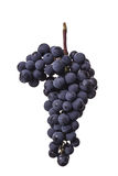 Dark bunch of grape in low light on white isolated background , macro shot , water drops Stock Photos