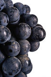 Dark bunch of grape in low light on white isolated background , macro shot , water drops Stock Image