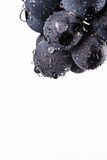 Dark bunch of grape in low light on white isolated background , macro shot , water drops Royalty Free Stock Photography