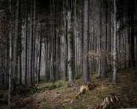 Free Dark Carpathian Mountain Stump Forest Stock Photography - 133268872