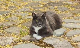 Dark cat sitting on rock pad Stock Photography