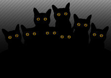 Dark cats Stock Images