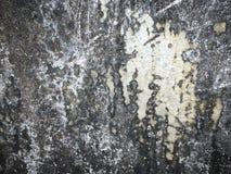 Dark cement with black lichen. Close up dark wall cement texture with black lichen. Abstract texture for concept design stock image