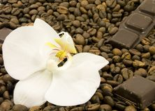 Dark chocolate and flower Royalty Free Stock Photography
