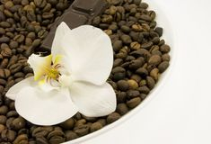Dark chocolate and flower Stock Photos
