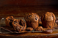 Dark Chocolate Muffins. Freshly baked chocolate muffins cooling on a rack Stock Image
