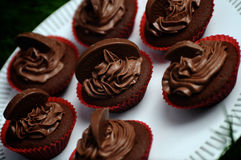 Dark Chocolate Orange Cupcakes. Beautiful luscious dark chocolate and orange cupcakes on a white plate against dark green grass Royalty Free Stock Images