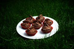 Dark Chocolate Orange Cupcakes. Beautiful luscious dark chocolate and orange cupcakes on a white plate against dark green grass Royalty Free Stock Image