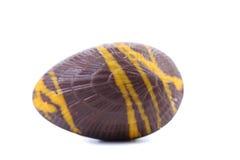 Dark chocolate seashell. Royalty Free Stock Photography