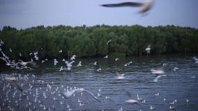 Dark cloud with blue light sky background Seagull in Bangpu Samutprakan Thailand stock video