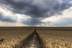 Dark Clouds Above a Wheat Field Stock Image