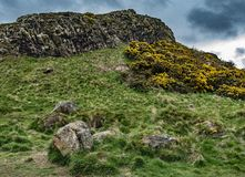 Walker`s View of Craggy Hillside and Flowering Gorse, Holyrood Park, Edinburgh, Scotland. Dark clouds hover behind the rugged volcanic crags of Edinburgh`s Royalty Free Stock Photography