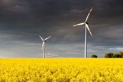 Dark Clouds over a canola field royalty free stock images