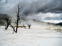 Dark clouds over dead trees in Yellowstone. Dark clouds over dead trees in Mammoth Hot Springs (Yellowstone National Park, Wyoming, USA Royalty Free Stock Photo