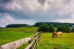 Dark clouds over horses and a fence on a farm in rural York Coun Stock Photography