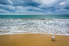 Dark clouds over the Pacific Ocean and a seagull stock photography
