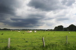 Dark clouds over the pasture Stock Images