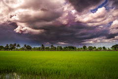 Dark clouds over rice field before rain storm. Royalty Free Stock Images
