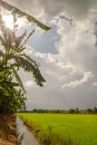 Dark clouds over rice field before rain storm. Stock Photo
