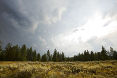 Dark clouds over sagebrush and pine trees, Jackson Hole, Wyoming. Dramatic clouds over an opening in the pine forest, with sagebrush near Swan Lake, summertime Royalty Free Stock Photography