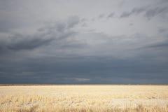 Dark clouds over savanna Stock Image