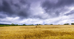 Dark clouds over a wheat field in Ireland Stock Photography