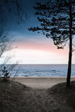 Dark coastal landscape. Pine tree Stock Photos