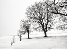 Misty Black & White. Dark colored trees on a misty morning form a stark contrast against the winter's snow Royalty Free Stock Images