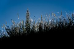 Dark contour of grass against the blue sky Royalty Free Stock Images