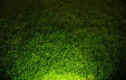 Dark contrasted green grass background. Top view and hard spot light from the bottom Royalty Free Stock Images