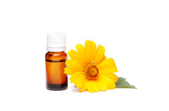 Dark cosmetic bottle of aromatic oil for herbal medicine with calendula flower isolated on white. Marigold extract. Stock Photo