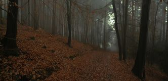 Dark creepy foggy beech forest. Gloomy magical landscape. Late autumn/fall,november evening, mist. South Moravia, Eastern Europe. Panoramic image royalty free stock image